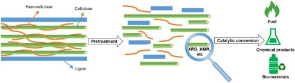 [52] The role of pretreatment in the catalytic valorization of cellulose