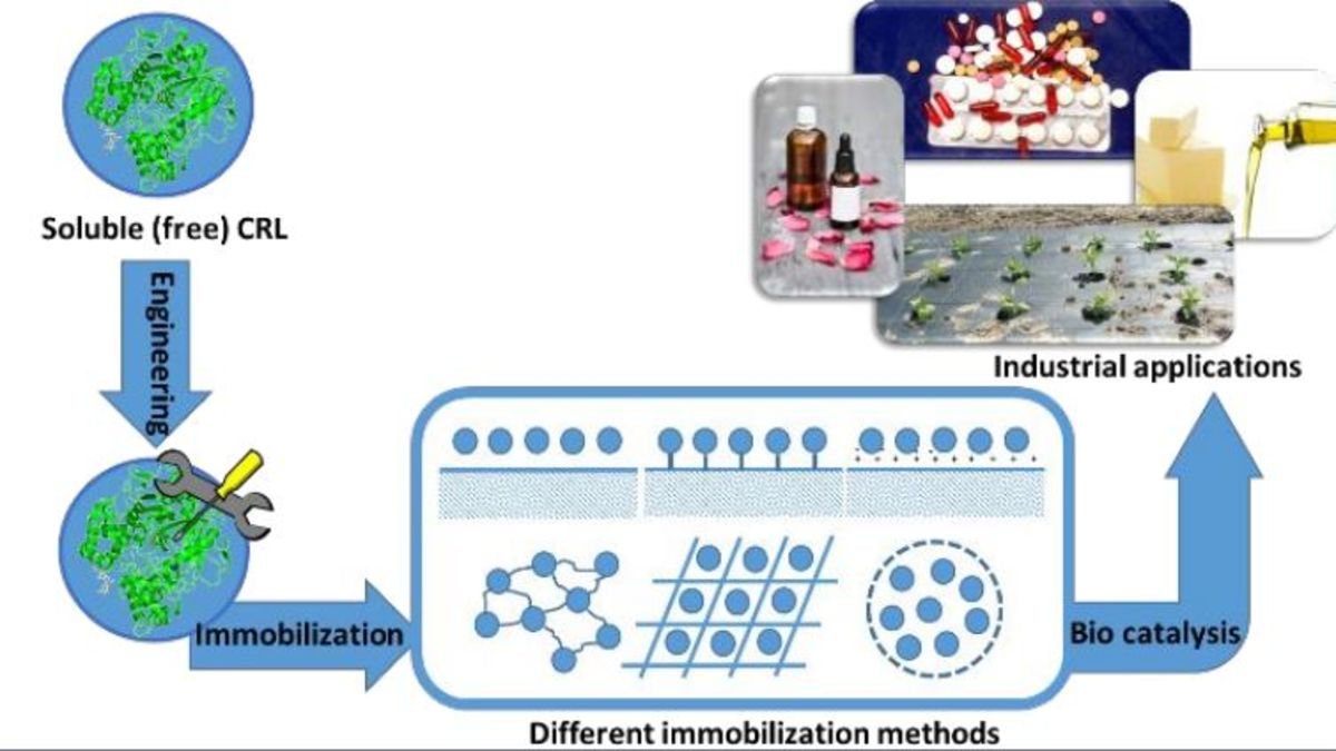 [49] Substrate-specificity of Candida rugosa lipase and its industrial application