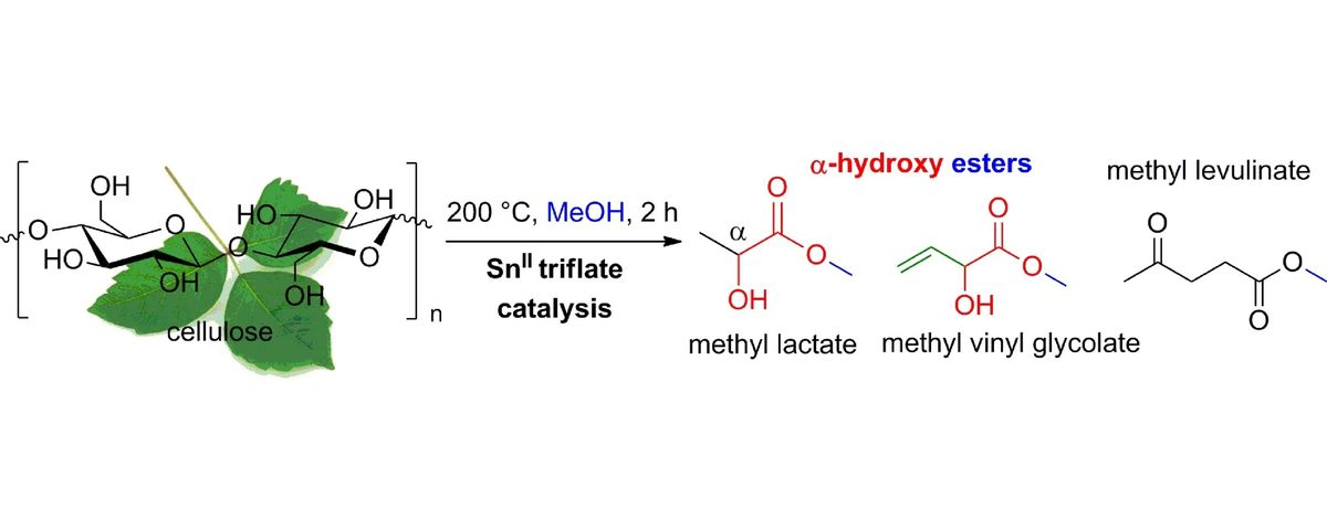 Tin triflate-catalyzed conversion of cellulose to valuable (α-hydroxy-) esters